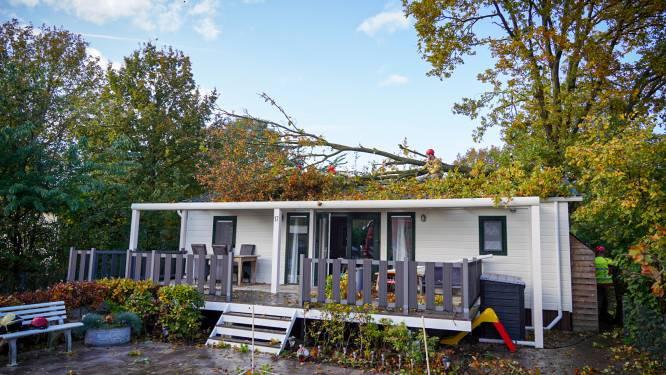 Zware windstoot leidt tot forse schade op camping in Zelhem: 'Dikke boom viel recht op het dak van een chalet'