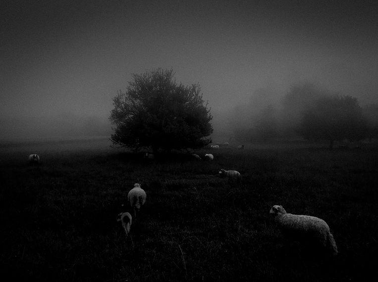 Morning Fog - Sukru Mehmet Omur (Frankrijk)