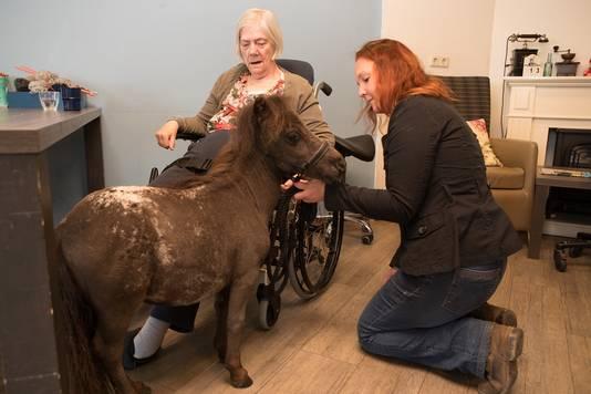Mevrouw Jager kijkt aandachtig naar therapiepaardje Woezel, terwijl Annebé het dier naar haar toe leidt.