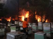 """Les feux atteignent les quartiers au nord d'Athènes: """"Notre objectif est de sauver des vies"""""""
