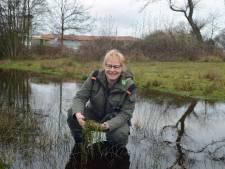 Onderzoek naar inzet van instecten en mijten tegen uitheemse woekerplanten in Zeeland