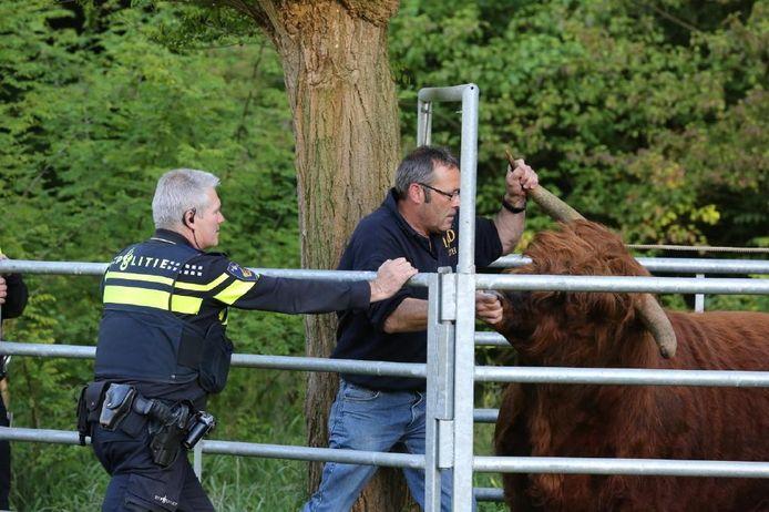 Agenten hielpen bij het vangen van de Schotse hooglander.