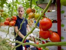 Eet twee tomaten per dag, tegen Poetins boycot
