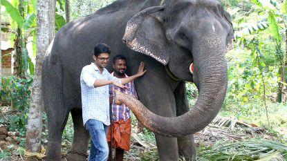Record: Aziatische olifant in India op 88-jarige leeftijd gestorven