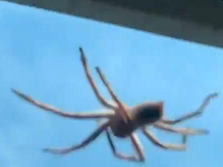 Enorme spin valt tijdens landing op Australische piloot
