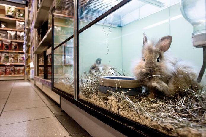 Zo mag het wél: de dieren ook achter glas, maar ín de winkel. Dat moet impulsaankopen voorkomen