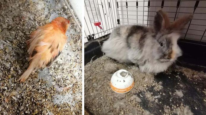 Des oiseaux morts et un lapin qui dormait dans ses excréments. C'est le triste constat qu'a tiré la SPA de Charleroi dans une habitation de Gilly.