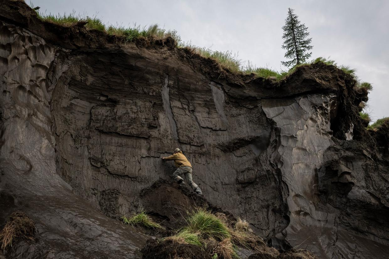 Nikita Zimov, directeur van het Pleistoceen Park in Siberië, neemt monsters uit de smeltende permafrost. Beeld Yuri Kozyrev/Noor
