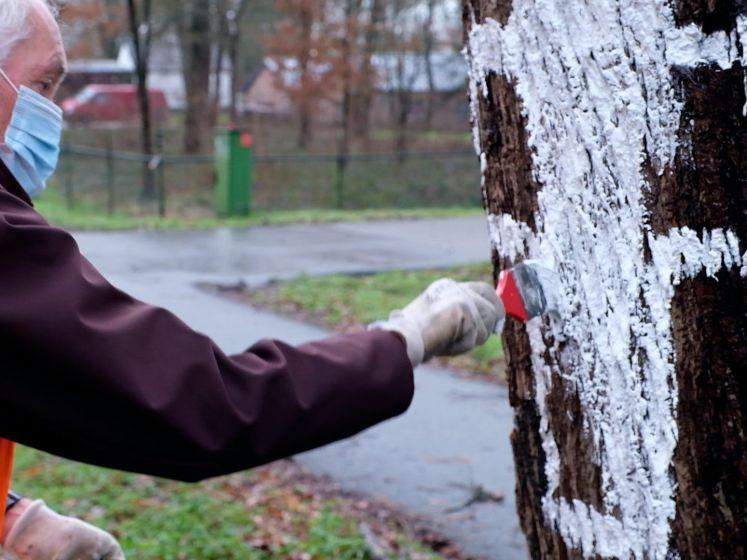 Witte kruizen als laatste verzet tegen bomenkap in Mook