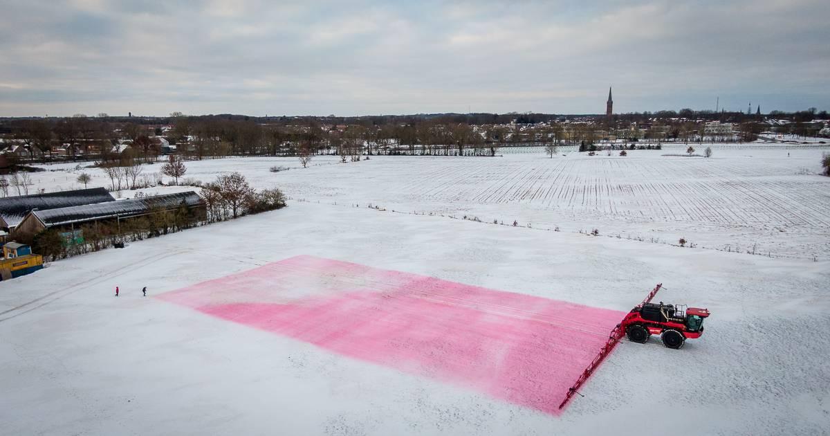 Wow! In dit weiland bij Steenwijk ligt een enorme Mona Lisa in de sneeuw: 'Gaan voor wereldrecord' - De Stentor