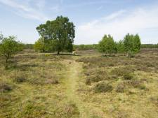 Natuur rond Wolfheze lijdt onder populariteit, Natuurmonumenten wil deel wandelpaden sluiten