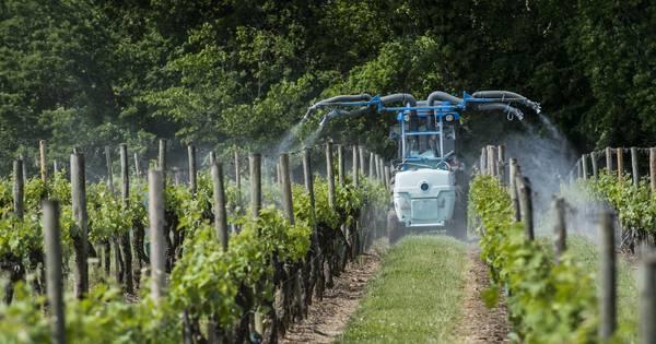 Gifvrije wijn of zijn wijnboeren charlatans? | Opinie | bd.nl