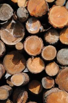 Geen 'oude' sancties voor houthandel Felix Clercx uit Helmond