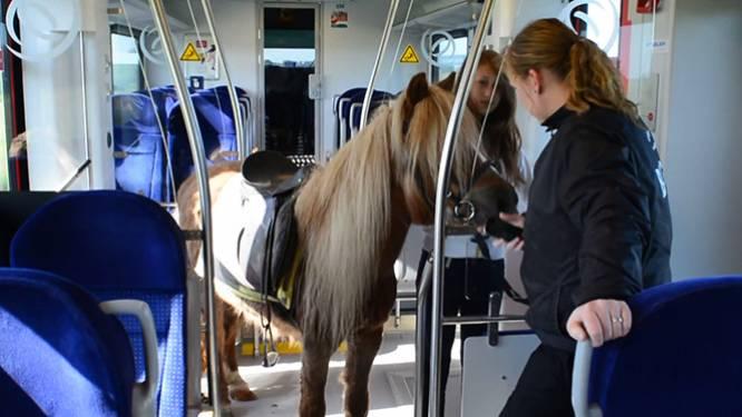 Meisje (12) reist met pony in trein
