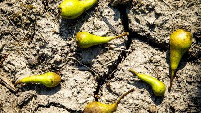 Laag grondwaterpeil zet Limburgse boeren onder druk