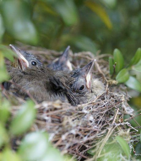 Dierenambulance massaal gebeld om 'weerloze' vogeltjes: 'Maar schijn bedriegt'