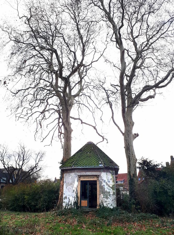 Het theehuisje voor de karakteristieke bomen moet nog opgeknapt worden. Foto Alfred de Bruin