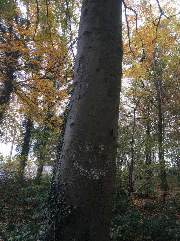 De bomen kunnen opnieuw lachen.