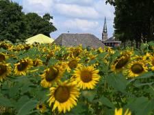 Franse vakantiegevoel is niet ver weg in Oploo: 'We moeten ook iets voor onze omgeving doen'