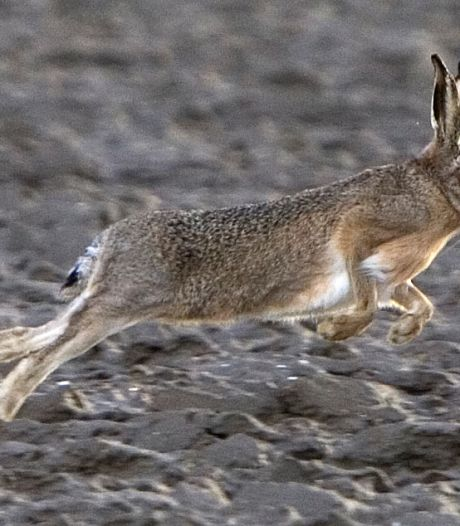 Minister Schouten laat oren hangen naar jagers