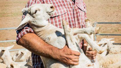 Australische cowboy nu al ster van 'Boer zkt Vrouw'