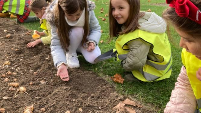 Leerlingen Vrije Centrumschool planten 3.780 bloembollen op de Coninckplein (en er volgen er nog 30.000 extra)