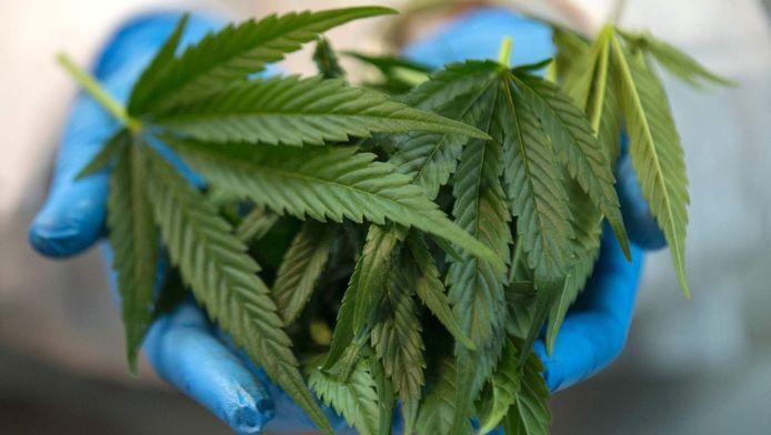 Cannabis is de meest verhandelde drug, gevolgd door heroine en cocaïne.