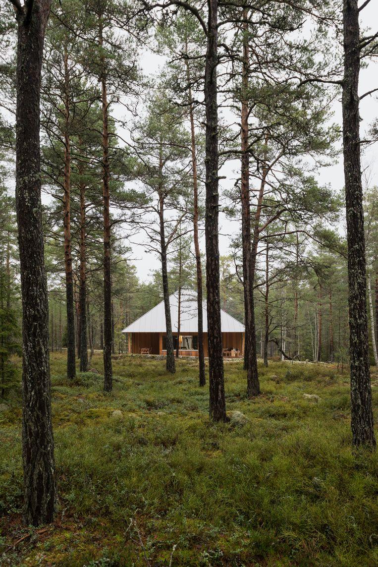 Eén met de natuur: het huisje met de honinggele cederhouten planken en het aluminium schilddak. Tussen de dennenbomen groeien bosbessen en heide. Beeld Nin Solis