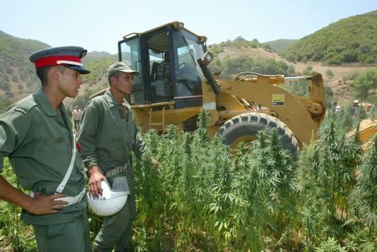 De Marokkanse politie ziet toe hoe een wietplantage in het Rifgebergte wordt vernietigd