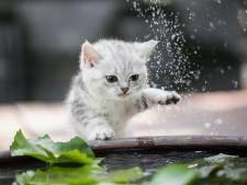 Waarom hebben katten eigenlijk zo'n hekel aan water?