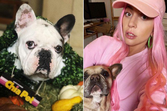 Lady Gaga met Gustave en Koji.