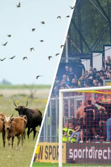 Nieuws gemist? Wonen in de polderwildernis en IJsselderby-rellen onder vuur