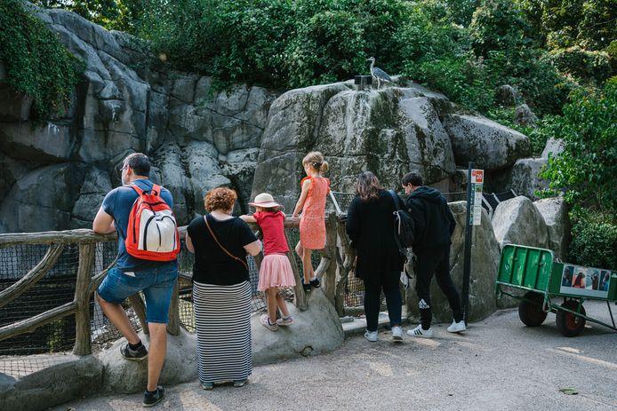 De Antwerpse Zoo tijdens de zomer.