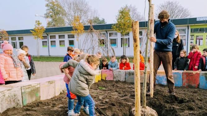 Vier toekomstbomen sieren scholencampus De Tandem en leefschool Het Droomschip