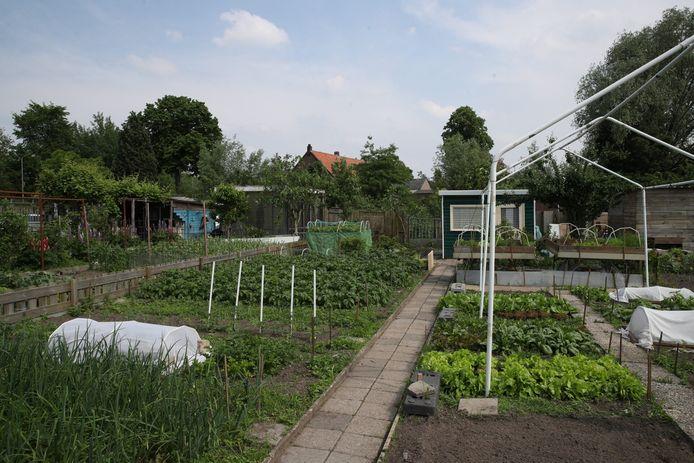 De volkstuinen aan de Sluisdijk in Helmond.