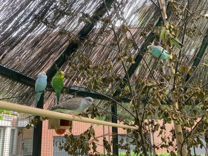 Er vliegen en zingen weer vogeltjes.