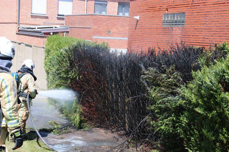De haag vatte vuur na het gebruik van onkruidbrander.
