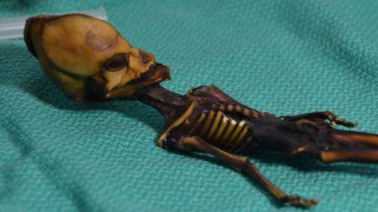 Raadsel opgelost: vreemde mini-mummie is dan toch geen alien