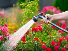 'Planten die te vaak water krijgen, worden lui'
