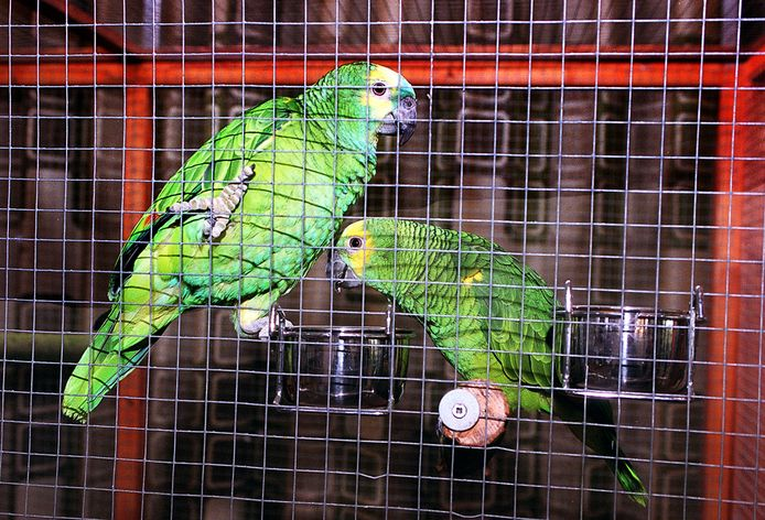 Papegaaien op een vogelbeurs.