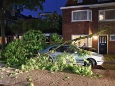 Code oranje: zwaar onweer in Brabant, talloze bomen omgewaaid