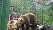 Ontvangt De Zonnegloed binnenkort twee beren?