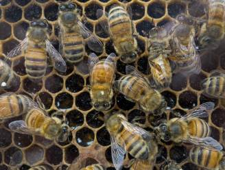Honing bevat pesticiden