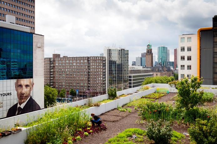 Stadslandbouw, één van de tientallen voorbeeldfinancieringen van Nationaal Groenfonds.