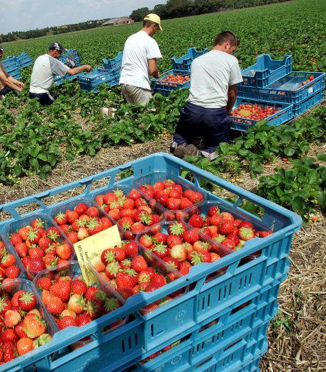 Plan voor tijdelijk wooncomplex arbeidsmigranten op bedrijventerrein Werkendam