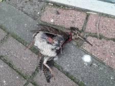Houtsnippen vliegen zich dood tegen Etten-Leurse kantoortoren