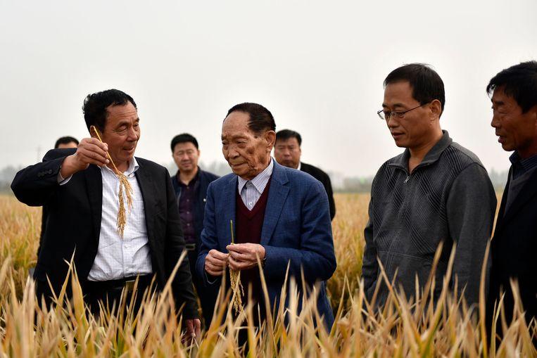 Yuan Longping (midden) inspecteert een rijstveld in Handan in het noorden van China (foto uit 2017)   Beeld AP