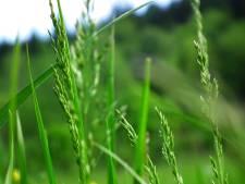 De kleur groen staat voor nieuw leven, jong, fris en vers