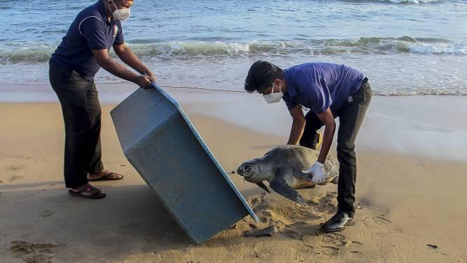 Dolfijnen en schildpadden dood door scheepsbrand Sri Lanka