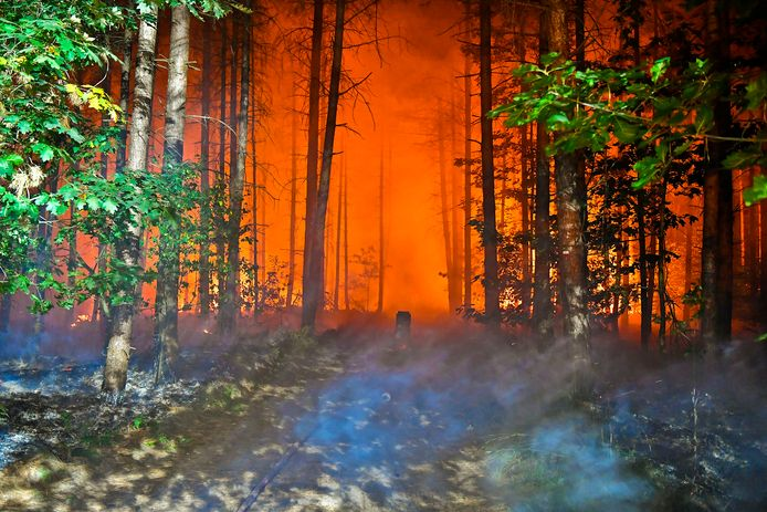 Bosbrand in Valkenswaard